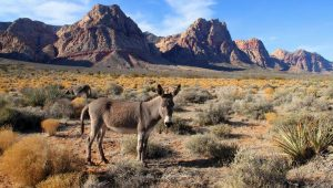 Nevada Day Trips and Attractions