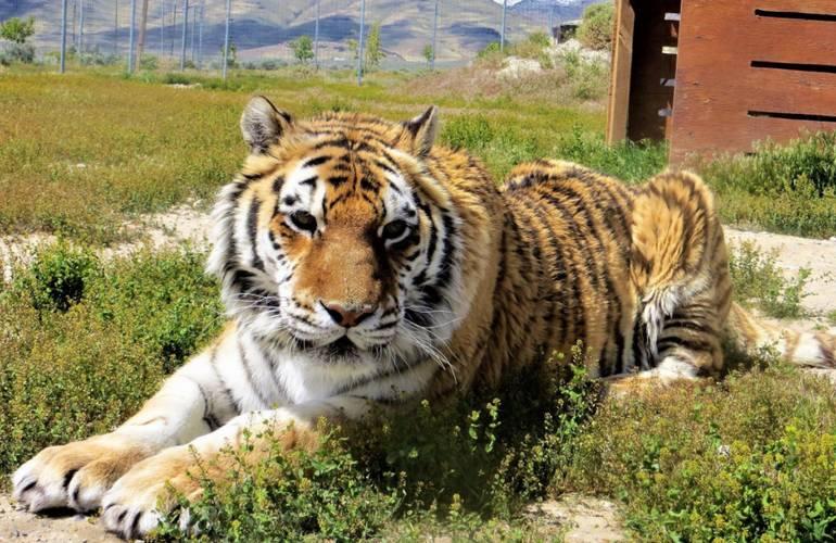 Safe Haven Wildlife Sanctuary Reno Day Trip
