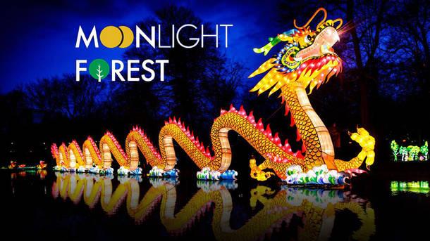 Moonlight Forest -- Lantern Art Festival
