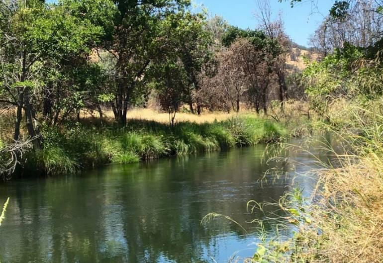 Putah Creek Wildlife Area